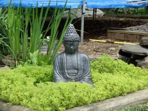 Garden 5-13-13 020