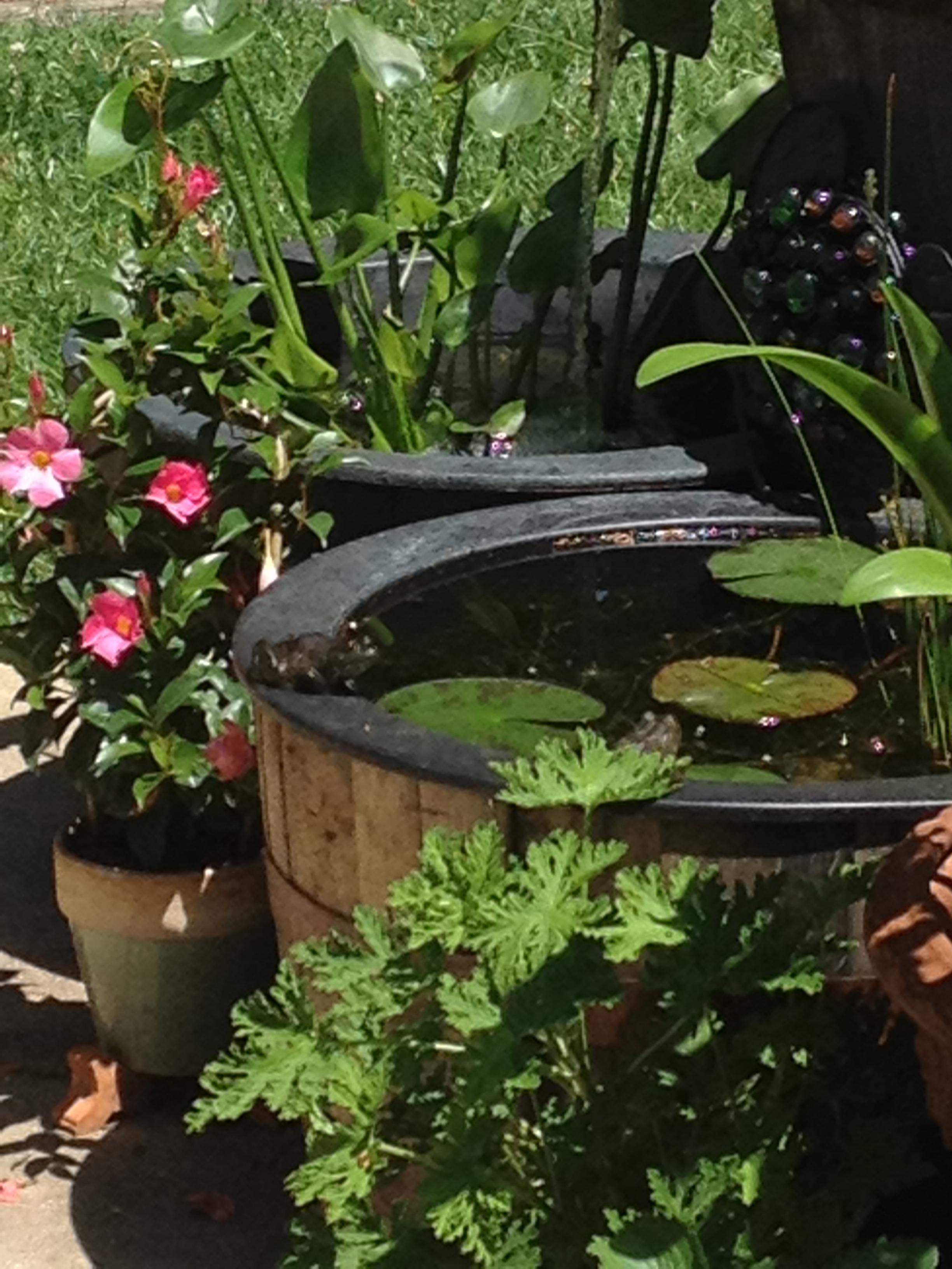 Beautiful How to Create A Garden