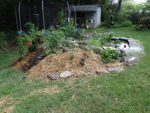 Raised Vegetable Garden Pond (8)