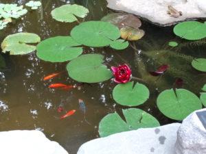 garden inspiration, garden design, How to create a water garden, backyard habitat