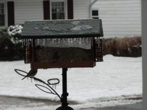 birds in winter 003