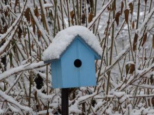 Birds - winter 005
