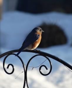 Bella and Blue Bird 015