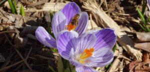 cropped-Spring-Garden-0221.jpg