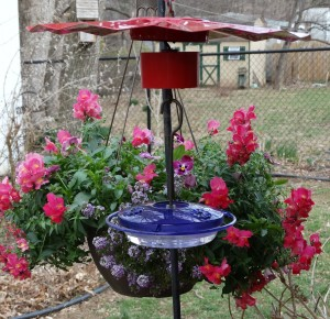 hummingbird feeders up 4-2 011