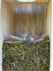 Bluebird monitoring - nest2