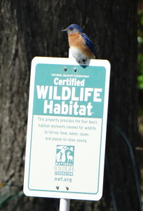 Bluebird on CWF Sign 4-2016